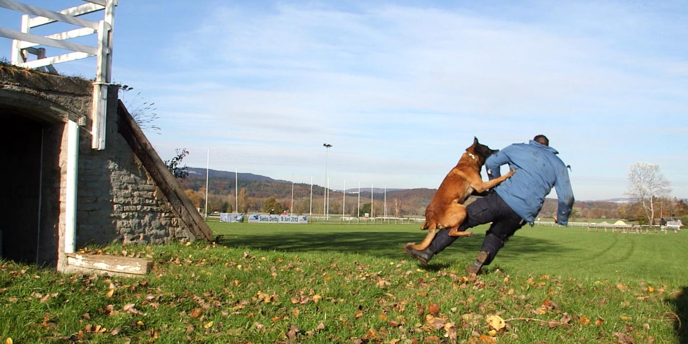 Bild Diensthund im Einsatz